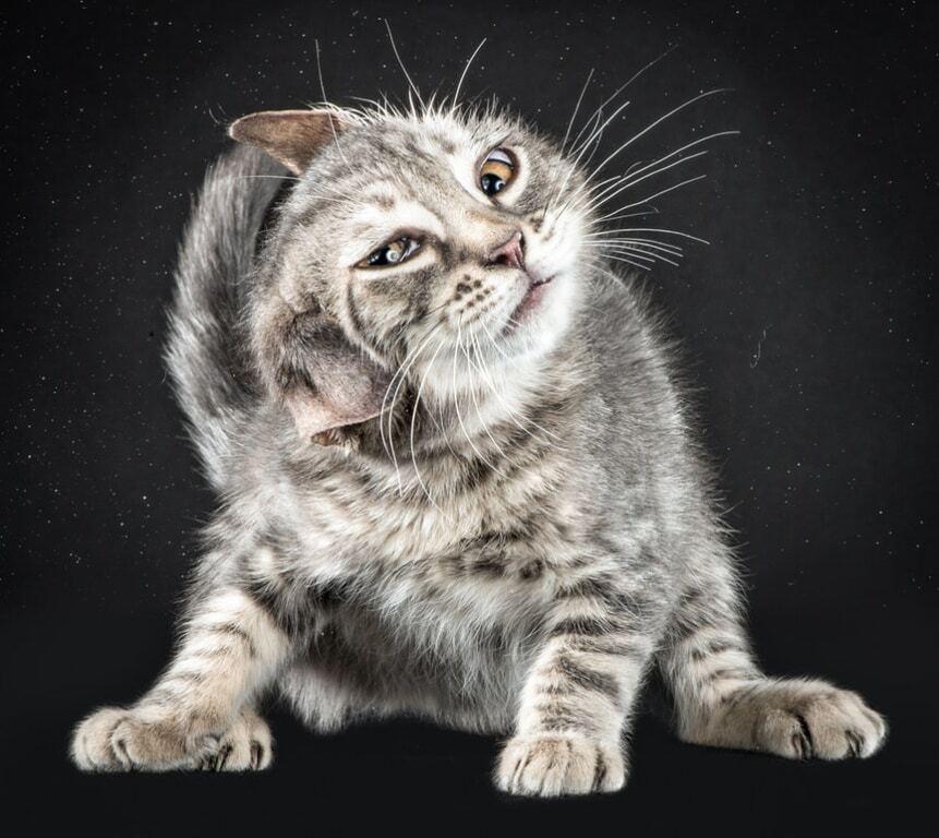 Самые нефотогиничные милашки: коты, над которыми смеется весь интернет