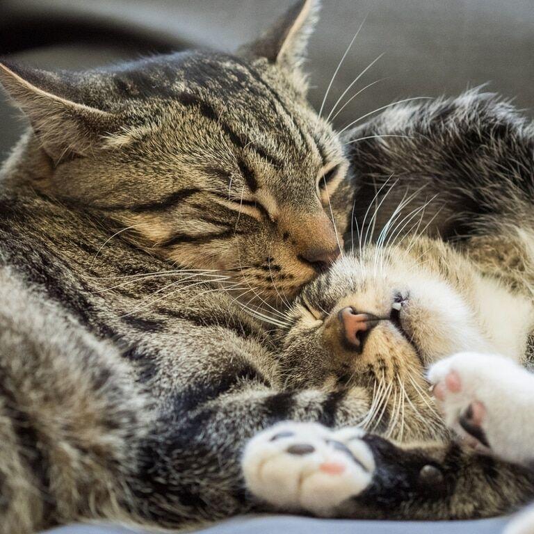 любимые коты фото могут