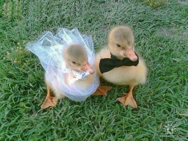 Опубликованы достаточно странные свадебные фото