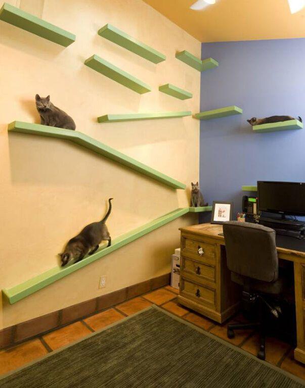 Диснейленд для котов: американец полностью перестроил свой дом ради хвостатых питомцев