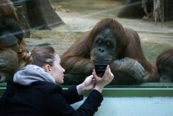 Смешные животные не оставят вас равнодушными