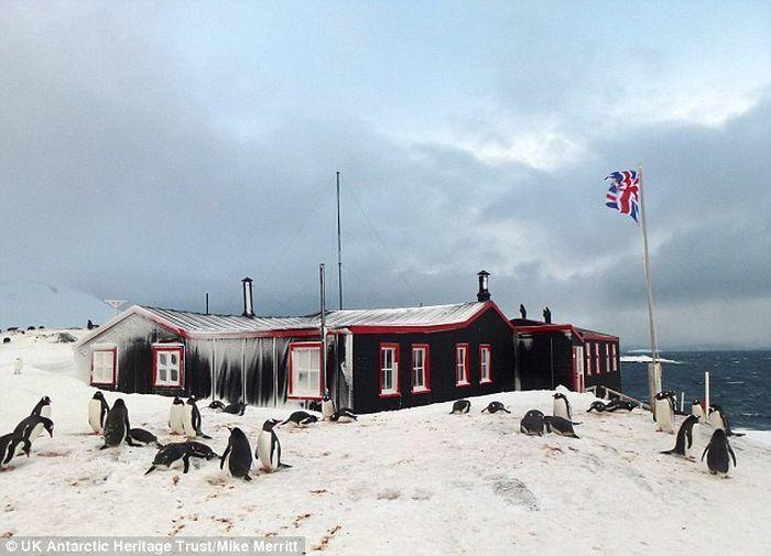 """""""Готов терпеть """"аромат"""" тысяч пингвинов?"""" Вакансия в Антарктиде вызвала ажиотаж"""