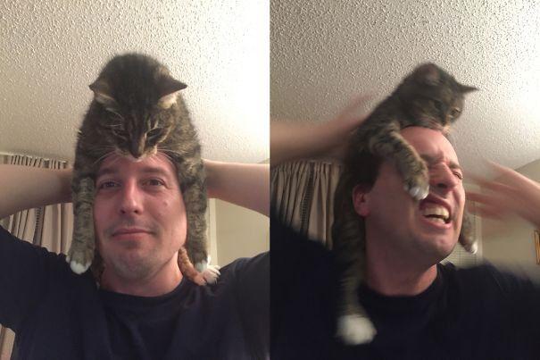 Шапки-кошки: новый тренд головного убора