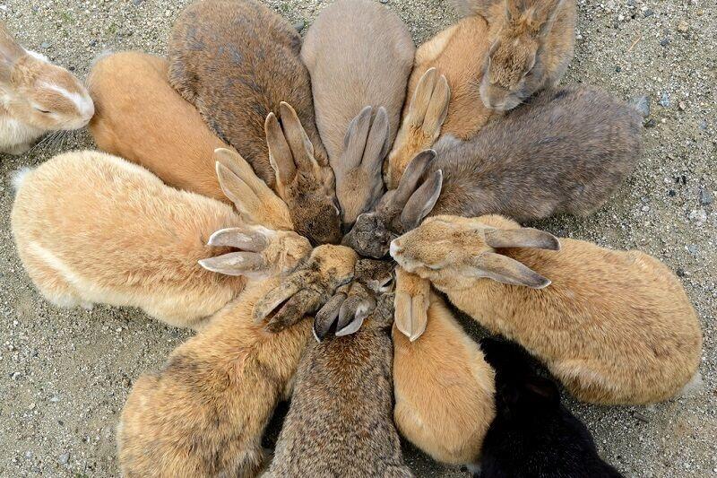 Сверхсекретная военная база превратилась в Остров кроликов: опубликованы фото