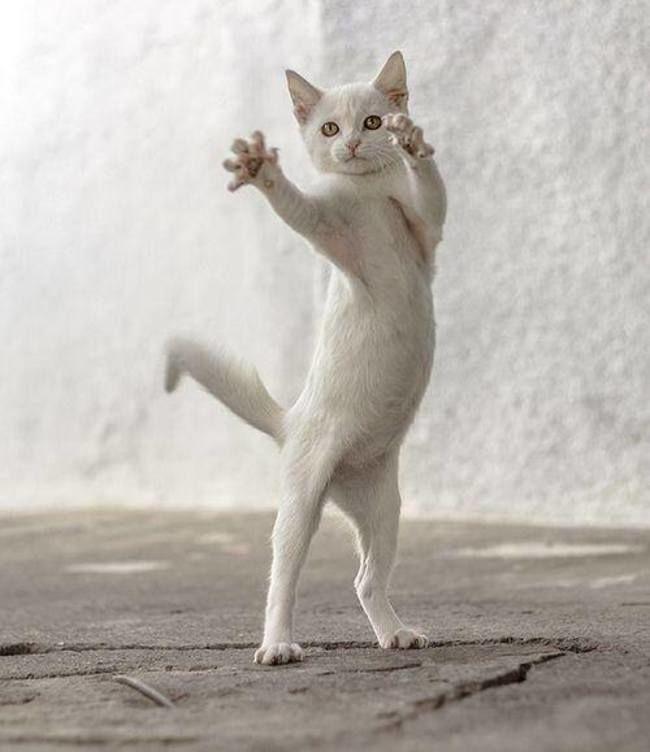 Поздравление, эх гульнем и потанцуем приколы картинки