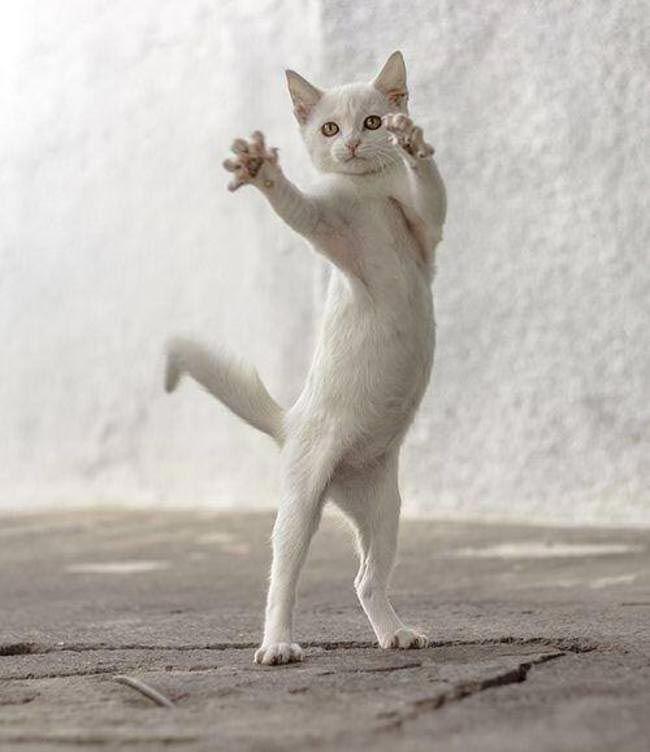 современных кот руки в боки картинки какая