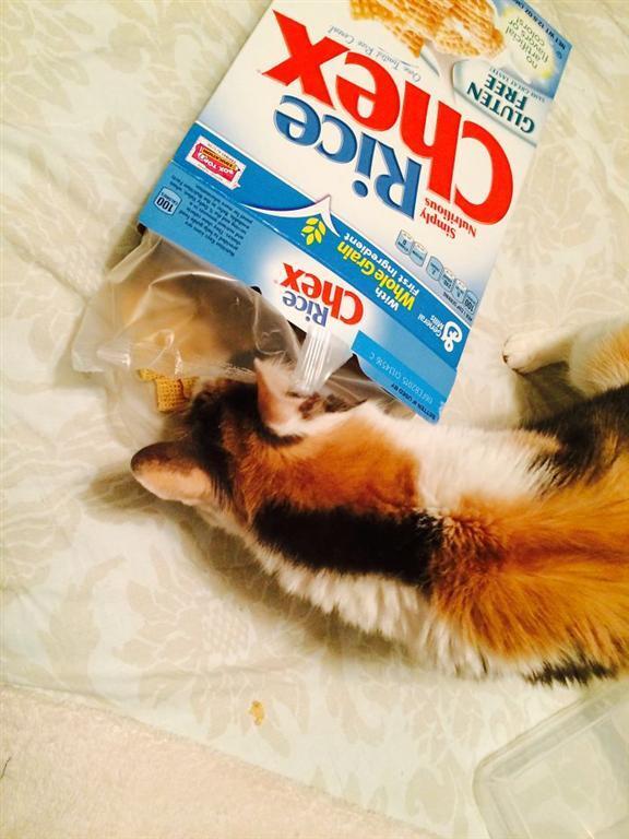 Кошки, которые любят суши, арбуз, оливки. Опубликованы фото