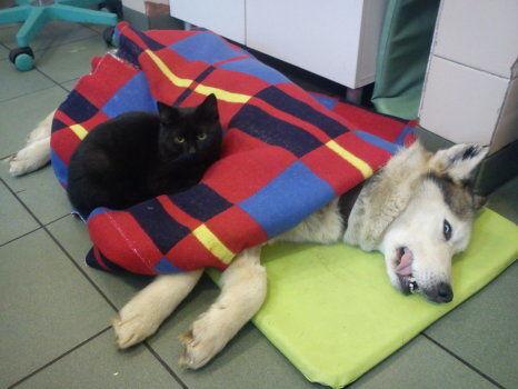 В польском приюте для животных живет кот-медбрат