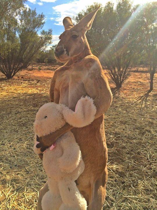 """Плюшевый заяц заменил кенгуру мать: """"мимимишность"""" фото зашкаливает"""