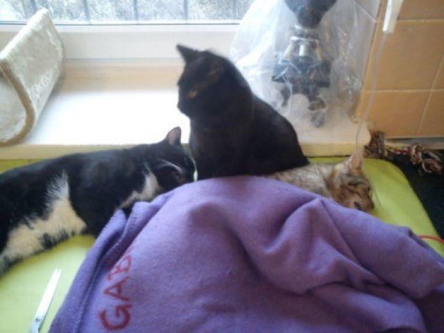 В приюте для животных работает удивительный кот-медбрат
