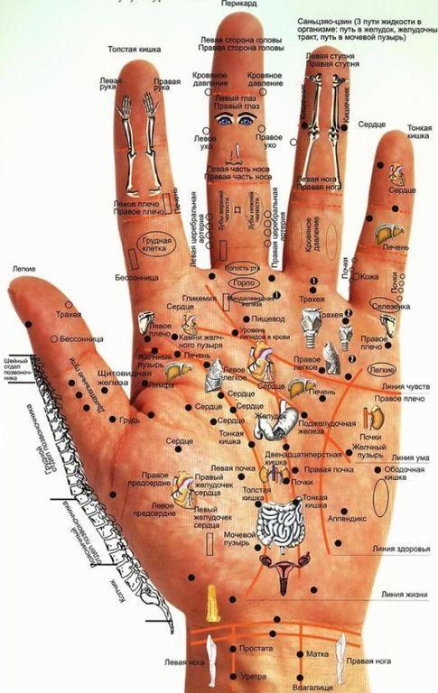 Болезни можно вычислить по рукам