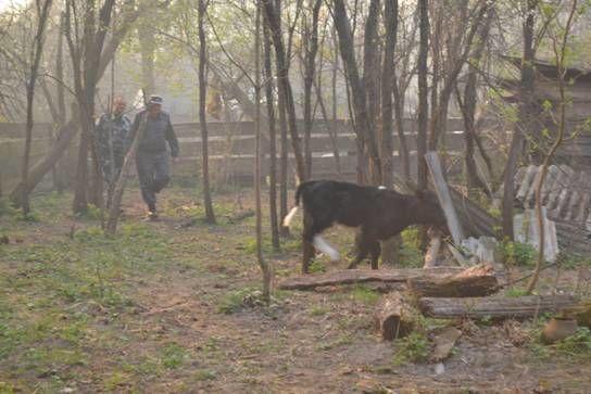 Пожар вблизи ЧАЭС: из зоны отчуждения эвакуируют жителей
