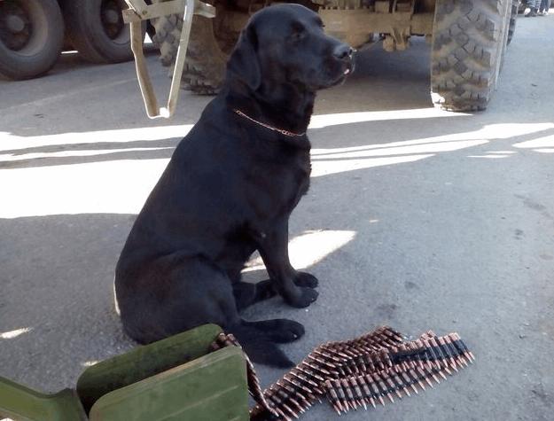 """""""Відчувають на постріл"""". Як бойові пси несуть службу в зоні АТО"""