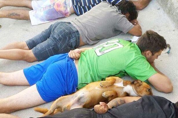 В Бразилии собака наркоторговцев сама сдалась полиции: фотофакт