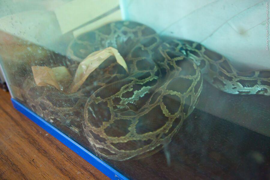 Как шьют сумки из змеиной кожи