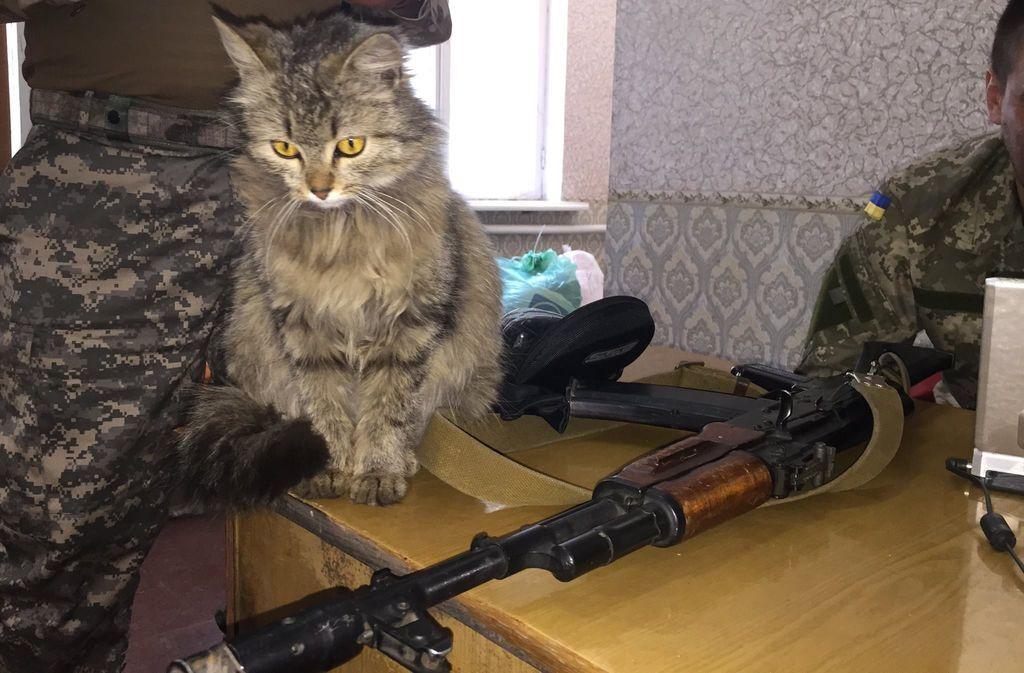 У бойцов АТО в Песках появился пушистый ангел-хранитель. Фотофакт