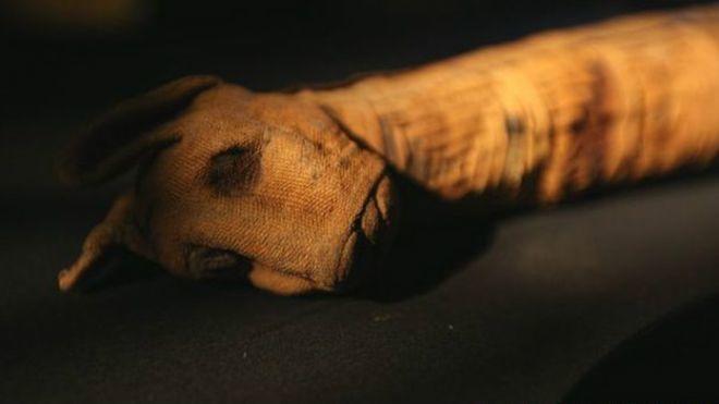 Скандал: в Египте обнаружили пустые мумии животных