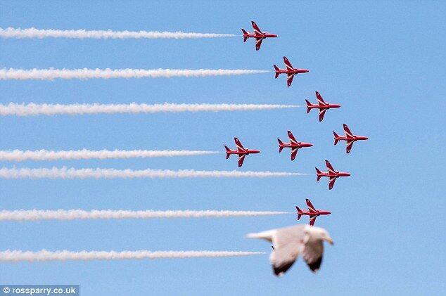 Птица очень смешно зафотобомбила полет группы ВВС Британии