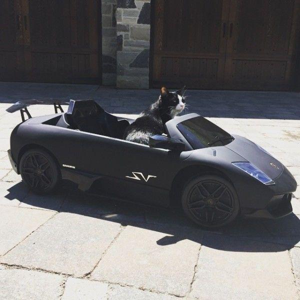 Канадец купил своему коту Lamborghini. Фотофакт