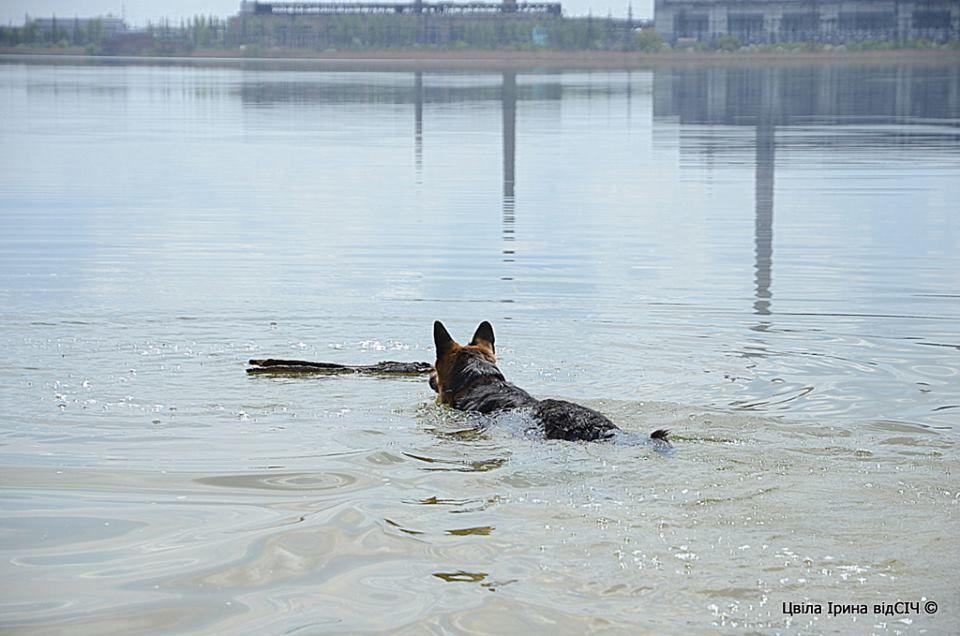 Бойцы АТО выходили собаку, сбежавшую от извергов-террористов