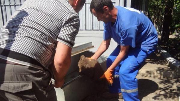 Это чудо! Два медвежонка спаслись от наводнения в Тбилиси