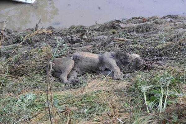 Грузинское сафари: cбежавшие из зоопарка животные будоражат соцсети