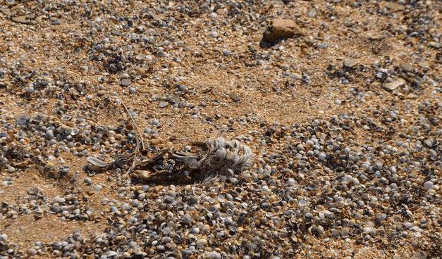 Хорошего отдыха! В море и на пляже Крыма мрут птицы