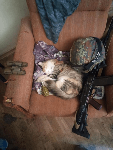 """Боец АТО """"охотился"""" на террористов вместе с верным... котом: фотофакт"""