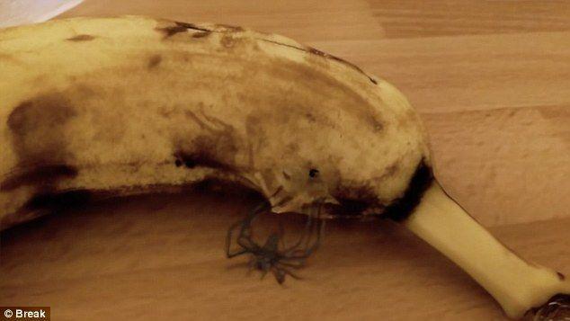 Ужасы с прилавка: мужчина наблюдал рождение паука из…банана