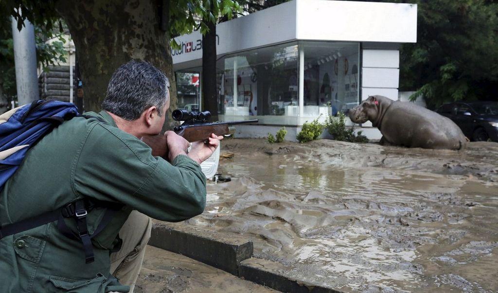 Нелегка работа: спецназ Грузии героически спас гигантского бегемота
