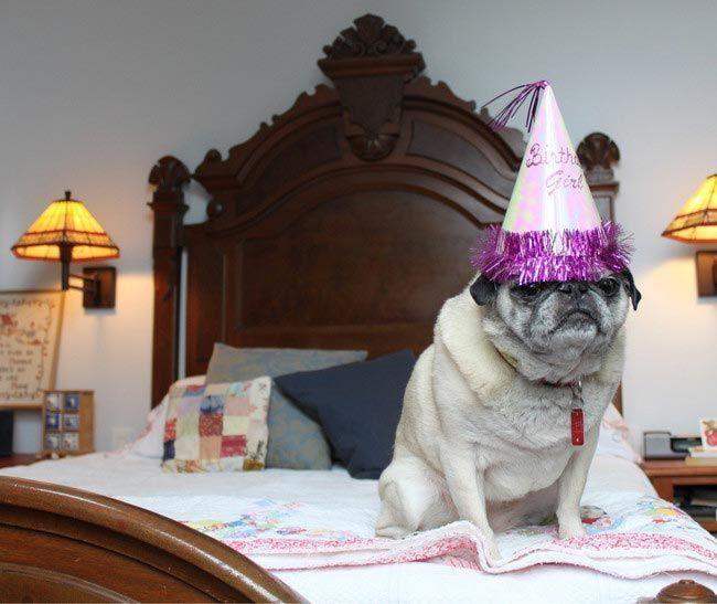 Прикольные картинки празднования дня рождения