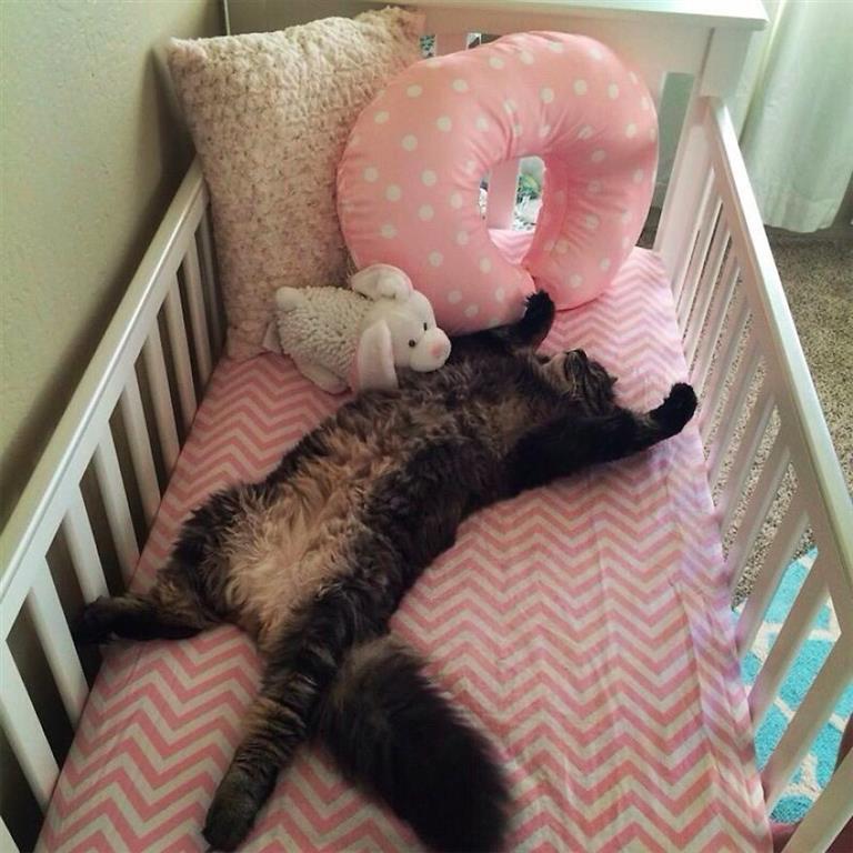 Прикольные картинки котики в кроватке