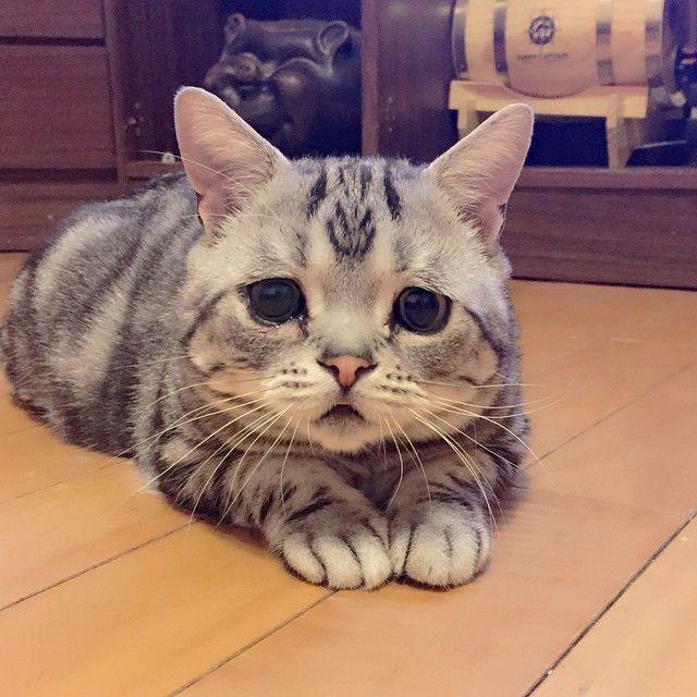 Самая грустная кошка растрогала чувства тысячи людей в сети