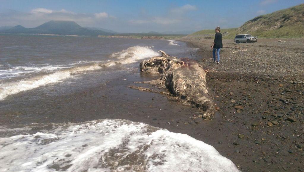 В России на берег выкинуло неведомую тварь: ученые в замешательстве