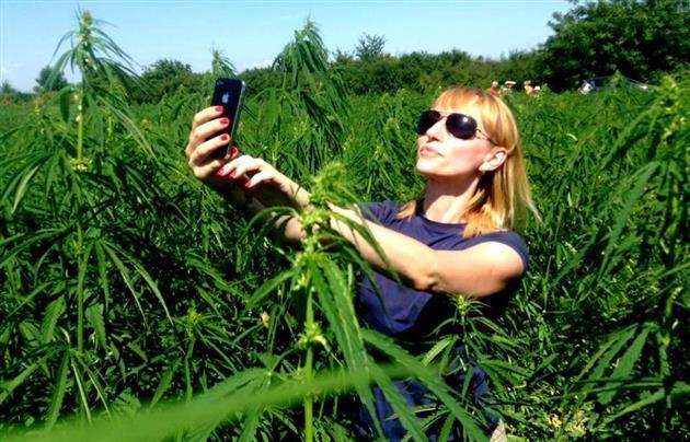Селфи в конопле: на Закарпатье появилось новое развлечение для туристов