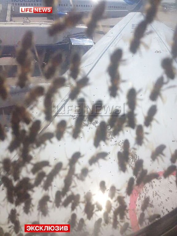 В московском аэропорту рой пчел атаковал самолет: опубликованы фото