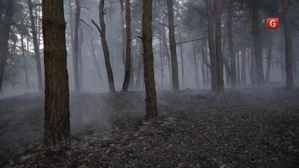 В Киеве полицейские тушили лесной пожар: видеофакт
