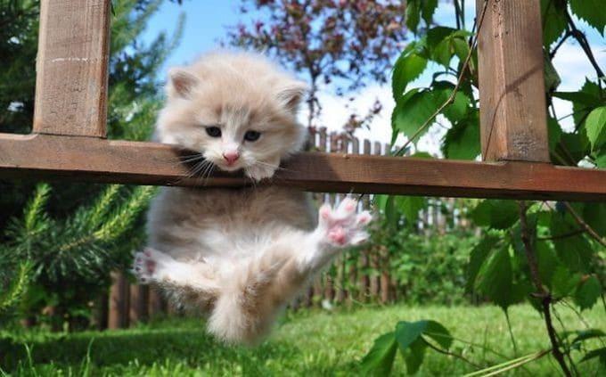 20 невероятно смешных фото котов-ниндзя