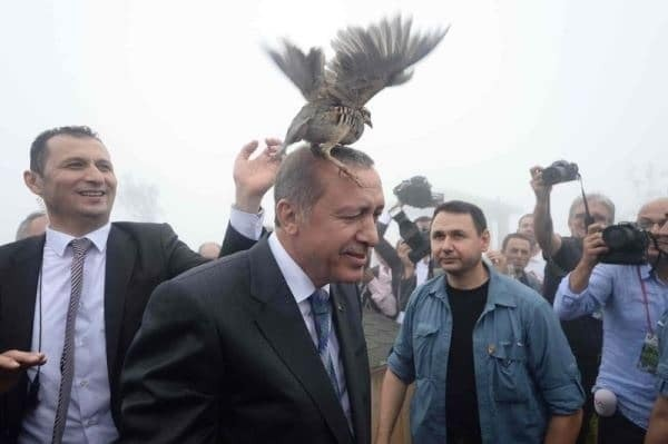 Президента Турции атаковала куропатка: фотофакт