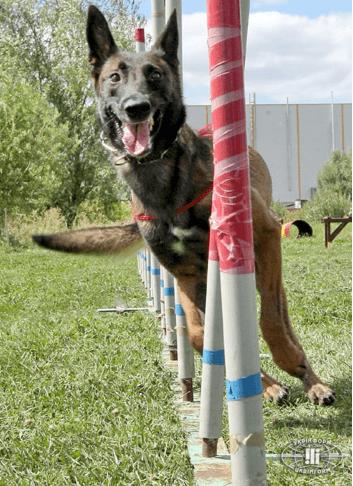Канадцы дрессировали собак-помощников для бойцов АТО