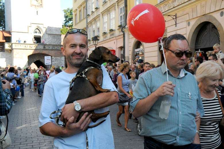В Кракове прошел грандиозный парад такс