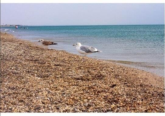 """Клочкова показала """"аншлаг"""" на пляжах в Крыму: фотофакт"""