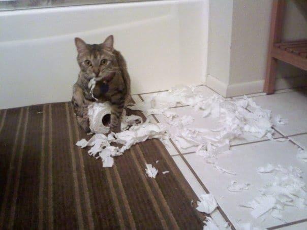 12 доказательств того, что кошки - ужасные соседи