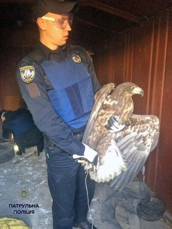 В Киеве полиция спасли из плена трех беркутов