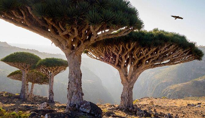 Топ-10 самых красивых памятников природы, которые охраняет ЮНЕСКО