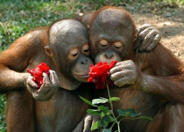 Как животные нюхают цветы: невероятно милые фото