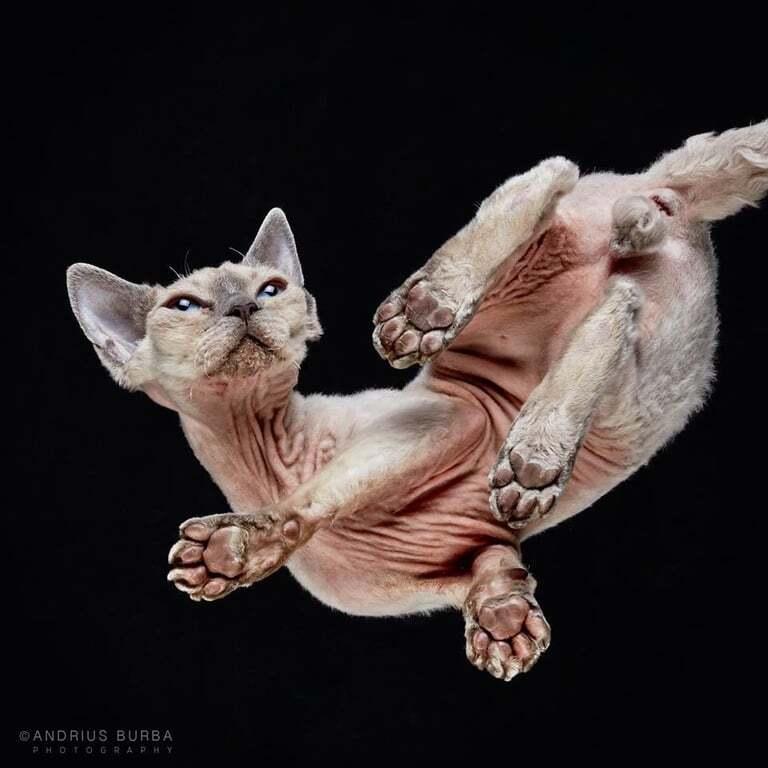 Мир вверх лапами: фотограф сделал забавные снимки кошек снизу
