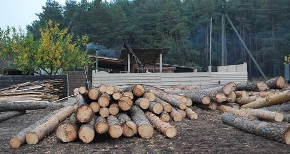 На Полтавщине накрыли банду, вырубавшую леса на миллион гривен