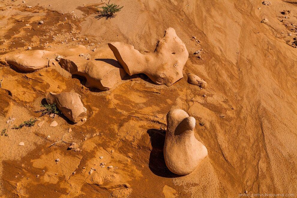 Кладовище динозаврів: дивовижне місце в пустелі Гобі