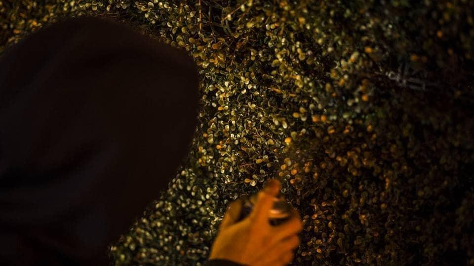 """Осінь прийшла: пластикові кущі у центрі Києва """"змінили колір"""""""